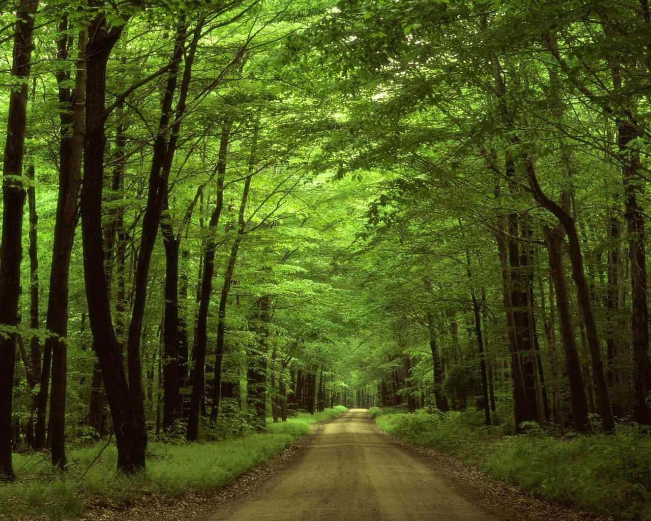 Importancia de la naturaleza herbolarios