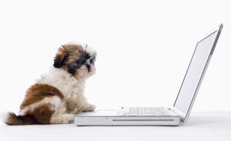 mascotas redes sociales